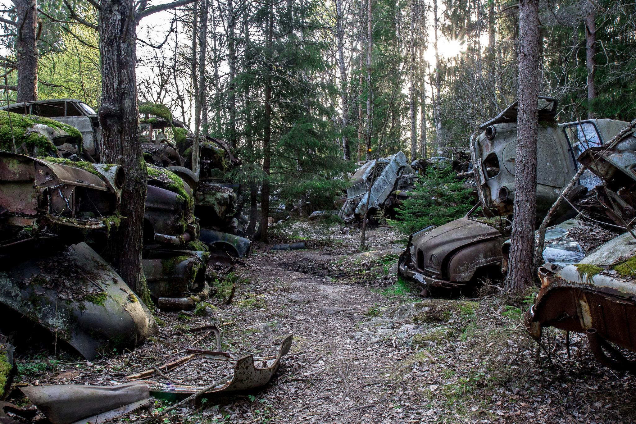 Лес Финляндии и старые автомобили