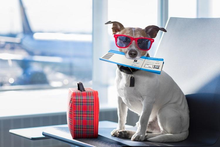 Собака с чемоданчиком и билетом