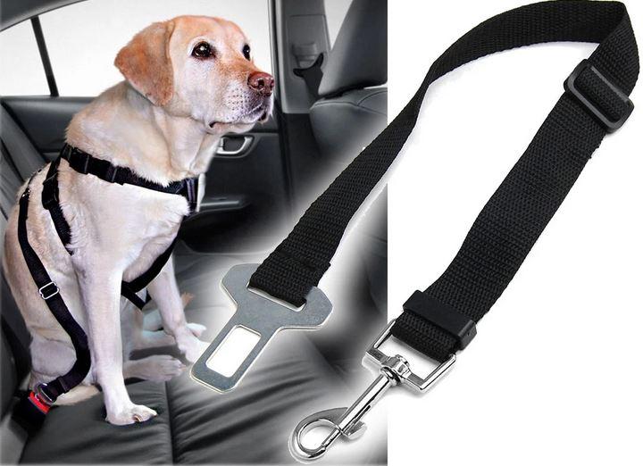 Собака, пристегнутая в авто