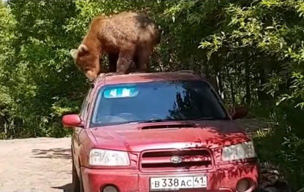 Медведь на автомобиле