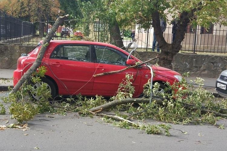 Ветки деревьев упали на авто