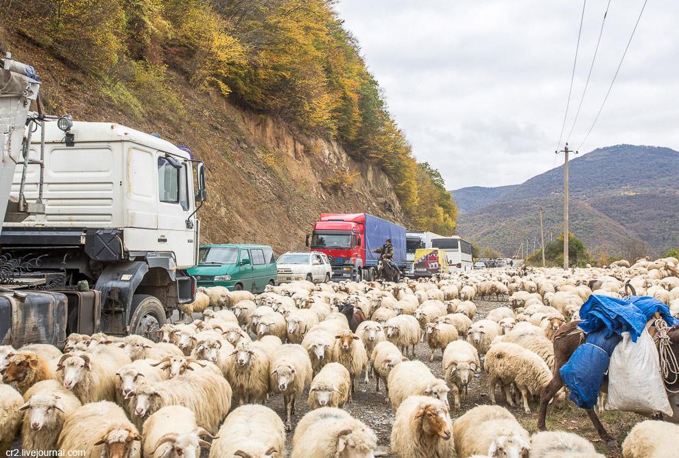 Пробка с баранами на дороге