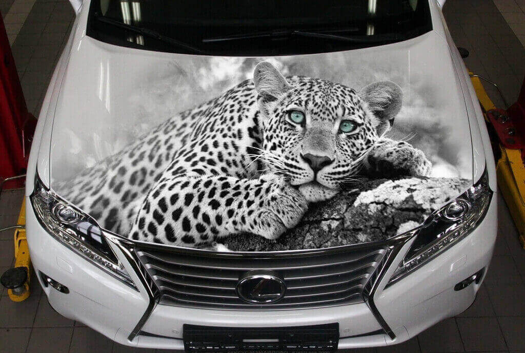 Рисунок на кузове машины